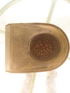 popcorn-roasted
